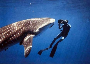 whale-shark-dive